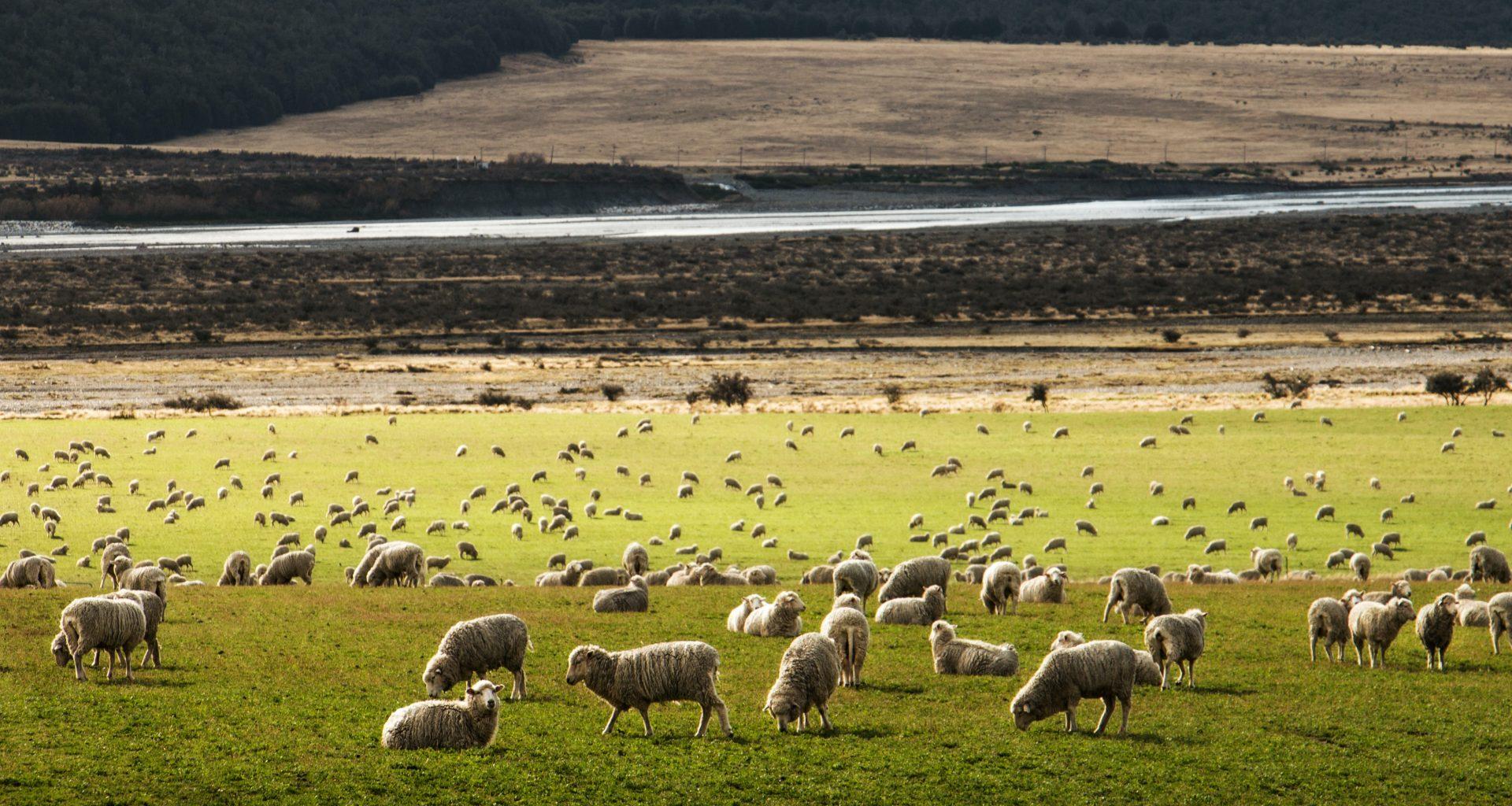 NZ land use